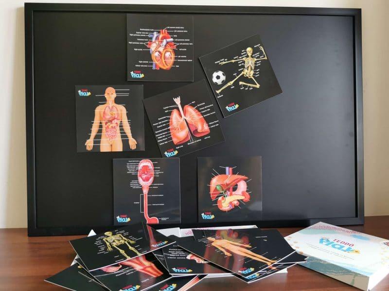 Human Anatomy Learning Cards
